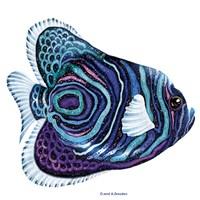 New Fish 3 Fine Art Print