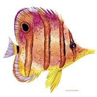 New Fish 4 Fine Art Print
