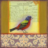 Carte Postale Bird 1 Framed Print