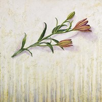 Lily Monet Fine Art Print