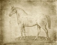 Horse Anatomy 101 Fine Art Print