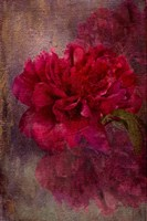 Tapestry Rose Fine Art Print