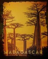 Vintage Baobab Trees in Madagascar, Africa Fine Art Print
