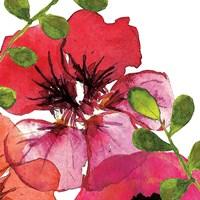 Vibrant Floral III Framed Print