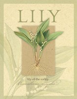 Lily of the Valley Fine Art Print