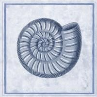 Blue Nautilus A Fine Art Print