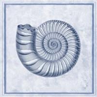 Blue Nautilus B Fine Art Print