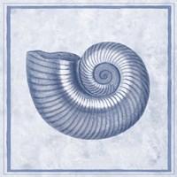 Blue Nautilus D Fine Art Print
