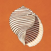 Cayman Quartet A Fine Art Print