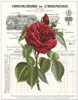 Heirloom Roses A Fine Art Print