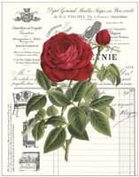 Heirloom Roses B Fine Art Print