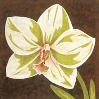 Surabaya Orchid Petites B Framed Print