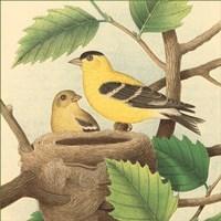 Goldfinch & Warbler A Fine Art Print