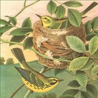 Goldfinch & Warbler B Fine Art Print