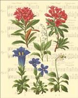 Allegro I Fine Art Print