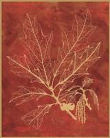 Golden Oak I Fine Art Print