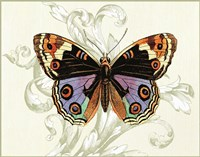 Butterfly Theme I Fine Art Print