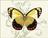Butterfly Theme II Fine Art Print