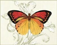 Butterfly Theme III Fine Art Print