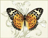 Butterfly Theme IV Fine Art Print