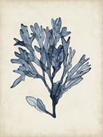 Seaweed Specimens II Fine Art Print