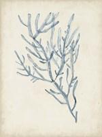 Seaweed Specimens III Fine Art Print