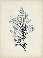 Seaweed Specimens IV Fine Art Print
