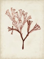Seaweed Specimens V Fine Art Print