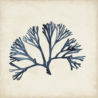 Seaweed Specimens XI Fine Art Print