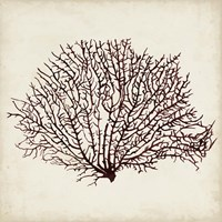 Seaweed Specimens XII Fine Art Print