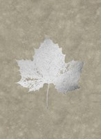 Silver Foil Leaf II on Lichen Wash Fine Art Print