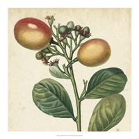 Garden Bounty I Fine Art Print