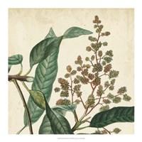 Garden Bounty II Fine Art Print