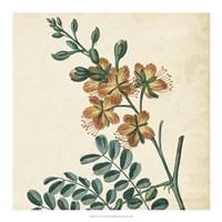 Garden Bounty III Fine Art Print