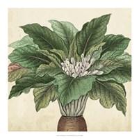 Garden Bounty V Fine Art Print