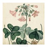 Garden Bounty VIII Fine Art Print