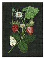 Strawberry Fields I Fine Art Print