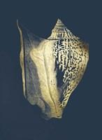 Gold Foil Shell III on Cobalt Fine Art Print