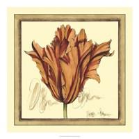 Tulip Study VII Framed Print