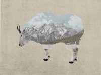 Rocky Mountain Goat Fine Art Print