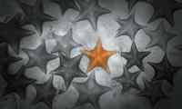 Pop of Color Orange Starfish Fine Art Print