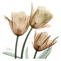 Autumn Tulips 1 Fine Art Print