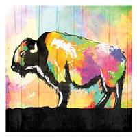 Colorful Buffalo Fine Art Print