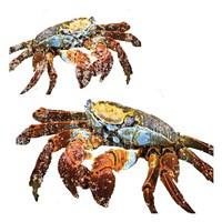Winter Crabs Fine Art Print