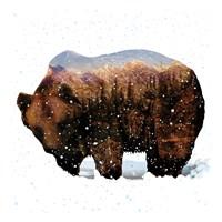 Grizzly Winter Fine Art Print