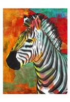 Vibrant Zebra Framed Print