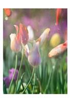 Tulip Swim B Fine Art Print
