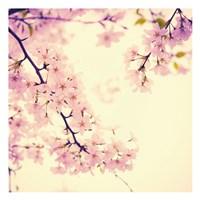 Spring Springs Fine Art Print