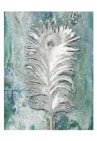 Silvery Peacock 1 Fine Art Print