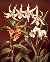 Orchid Trio I Fine Art Print